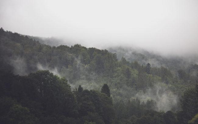 gracias planeta día mundial medio ambiente